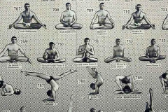 908 asana dharma yoga